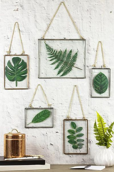 Framed Plants The Most Popular Dorm Room Trends According To Pinterest Photos Framed Plants Leaf Projects Diy Wall Decor