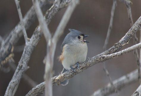 Birds & Birds
