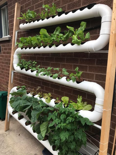 Update on my nft hydroponic system!