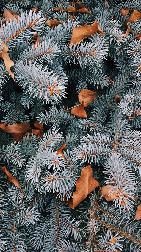 The Perfect Set Of Wallpapers For Your New Iphone Xr Preppy Wallpapers Wallpaper Iphone Christmas Cute Christmas Wallpaper Winter Wallpaper