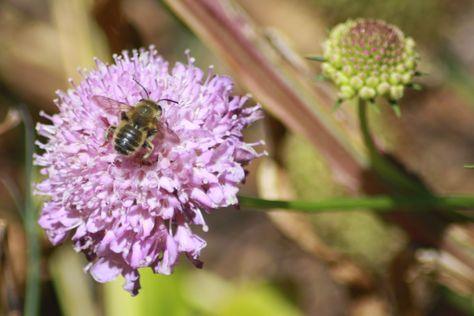 Green Bean Chronicles: Spot The Pollinator #6