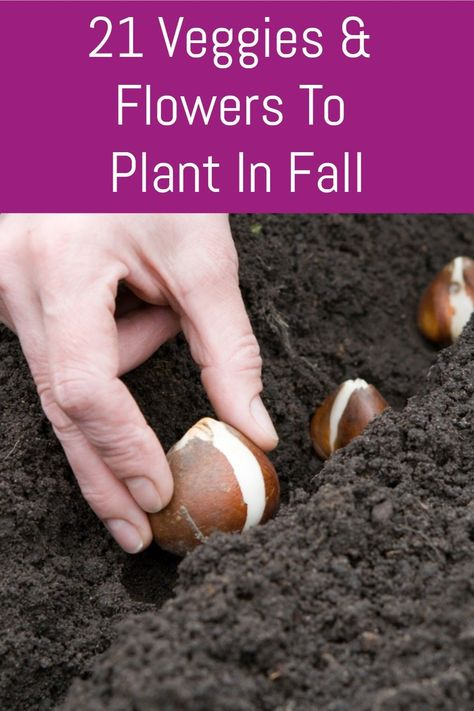 21 Veggies & Flowers To Plant In The Garden In Fall