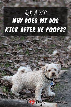 Pin On Dog Vets Near Me