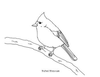 Tufted Titmouse Coloring Page In 2020 Coloring Pages Animal