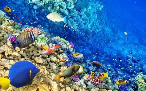 30 Ideas De Arrecifes De Coral Arrecifes De Coral Coral Fondo De Mar