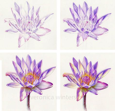 6 Techniques To Up Your Colored Pencil Game Color Pencil Art