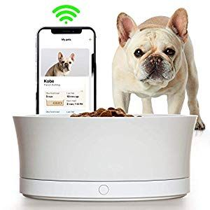 Obe Probowl Smart Dog Food Bowl For Small Dogs Award Winning