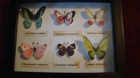 Cruelty-free butterfly display!
