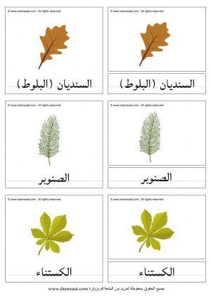 مطابقة اوراق الاشجار والثمار المطابقة ذات الثلاث قطع Herbs Plants