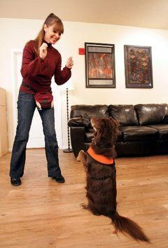 Victoria Stilwell Training Positive Dog Training Dogs Dog