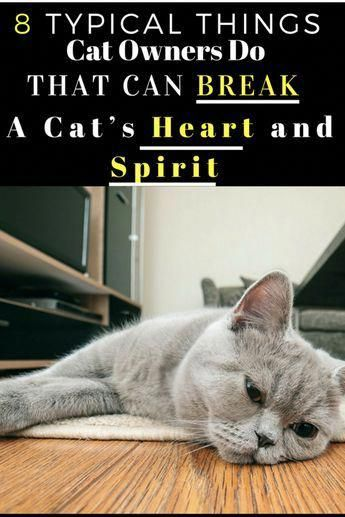 If You Value Your Cats Spirit You Ll Want To Avoid The Following Habits These Are Surefire Ways To Zap Your Kitty S True Feline N Cat Owners Cat Spirit Cats