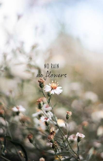 Super Quotes Simple Instagram 17 Ideas No Rain No Flowers Flower Quotes Instagram Captions Flower wallpaper with quotes