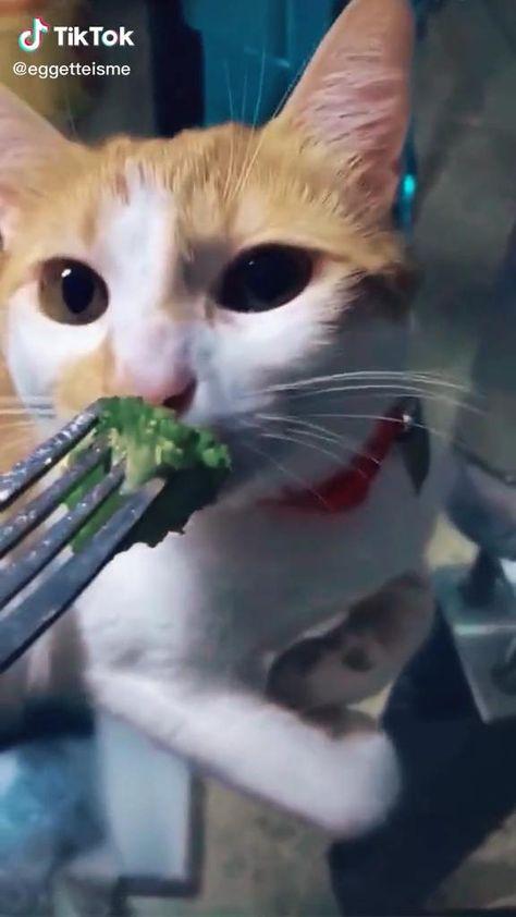 #cats #catsofinstagram #catsandkittens #catsagram #catslover