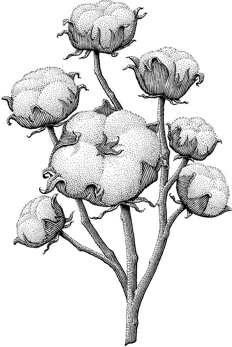 amazingly beautiful floral illustration that can be used to decorate your journal or as a reference for your daily sketching practice (or even as a cool flower tattoo design! Art And Illustration, Gravure Illustration, Ink Illustrations, Botanical Drawings, Botanical Prints, Stippling Art, Illustration Botanique, Ink Pen Drawings, Scratchboard