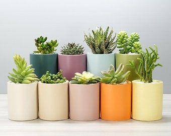 Dipped Concrete Succulent Planter 2 Sizes 9 Colorways Etsy En 2020 Flores En Maceta Plantas En Maceta Jardinería En Macetas