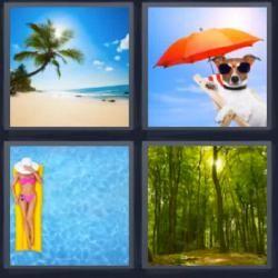 Soluciones 6 Letras 4 Fotos 1 Palabra Respuestas Actualizadas 4 Fotos 1 Palabra Fotos Perro Con Lentes
