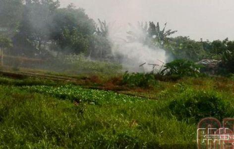 Sekolah Lapang Atasi Kebakaran Lahan Gambut Tanaman Sekolah Petani
