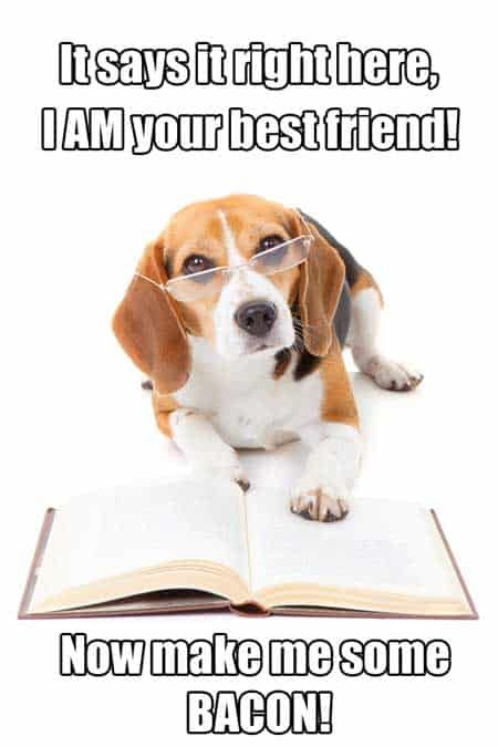 The Ultimate Beagle Humor Beagle Memes And Funny Beagle Dog Pics