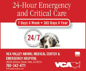 Is Your Dog Coughing Or Choking Pet Companion Magazine Dog Coughing Emergency Hospital Dogs