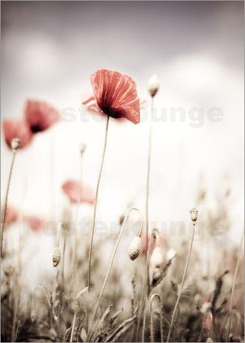 Nailia Schwarz Roter Mohn Mit Bildern Blumen Kunst Mohnblume Blumen