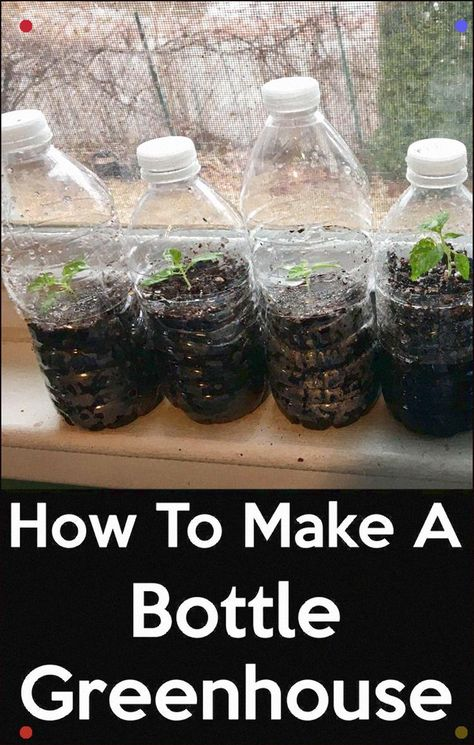How To Make A Bottle Greenhouse. Reuse And Use Transparent Plastic Bottles As Greenhouse For Seeds Starting. Figure out How To Start Seeds With Plastic Water Bottles Or Any Transparent Bottle And Save Money. #Minigreenhouse #Greenhouse #Seeds #Seedstarting #Bottle #Abottlegreenhouse #Cupgreenhouse #Bottlegreenhouse #Recycle #Plastic #Waterbottle #Plastic #Diy