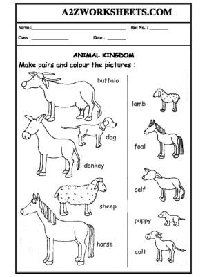 Worksheet Of Worksheet 06 Animals And Their Babies Domestic Animals Animals Science Animal Science Science Worksheets Baby Animals