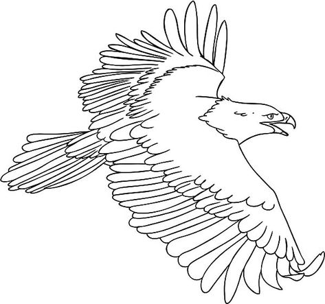 Harpy Eagle Coloring Pages For Kids Coloring Sun Eagle Drawing