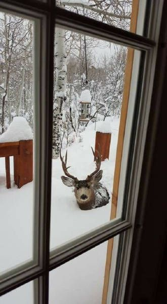 34 Cases Of This Could Only Happen In Canada - Actually, we had a deer that used to sleep under my bedroom all the time. Not in Canada lol.