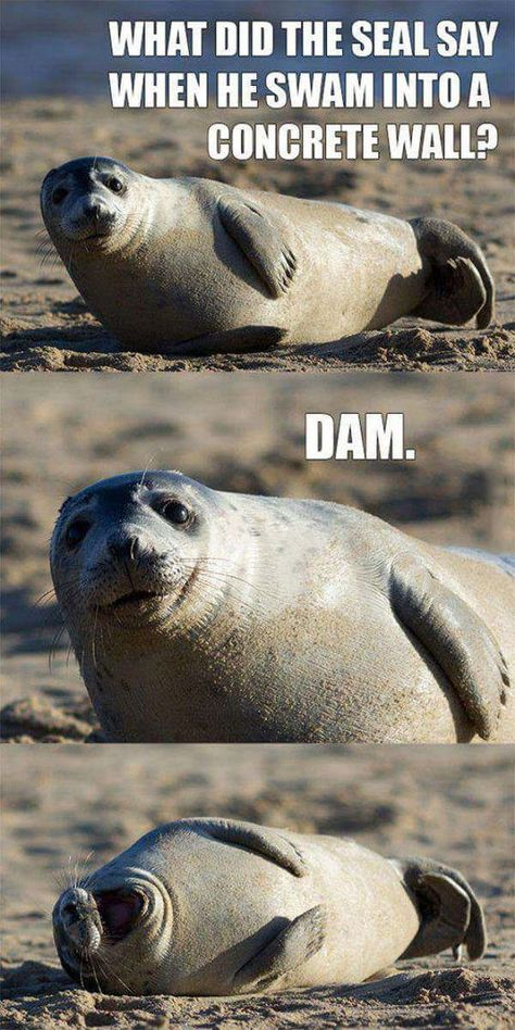 28 Cute and Funny Animal Pictures for an Aww Moment -
