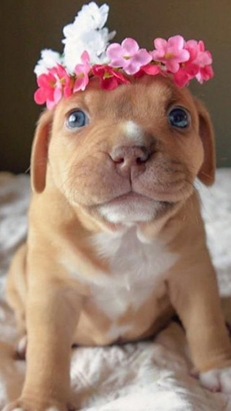 Iphone X Wallpaper Funny Puppies Cute Animals Cute Puppies