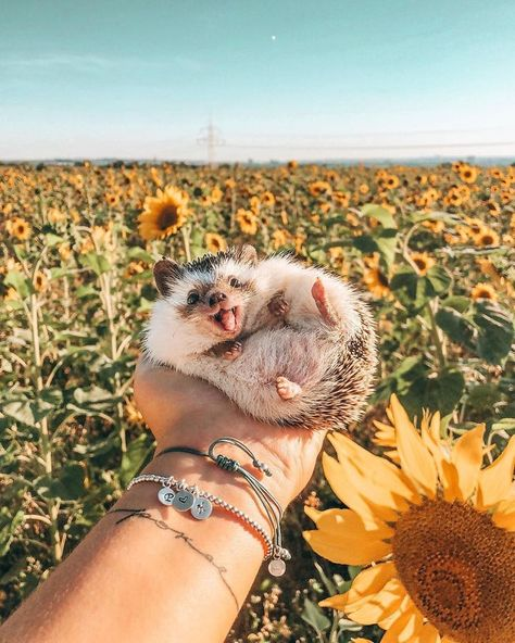 This Hedgehog's Life Is More Interesting Than Mine: Meet Cheerful Animal Named Herbee Baby Animals Super Cute, Cute Little Animals, Cute Funny Animals, Pics Of Cute Animals, Cute Pics, Baby Farm Animals, Baby Cows, Baby Ducks, Happy Animals