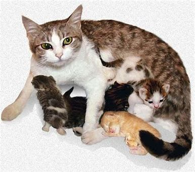 Saveluckythecat On Cat Birth Cat Having Kittens Pregnant Cat