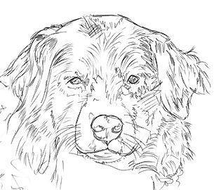 Hunde Und Katzen Zeichnen Malen Hunde Katzen Malen Und Zeichnen Katze Zeichnen Katze Malen Hund Zeichnen