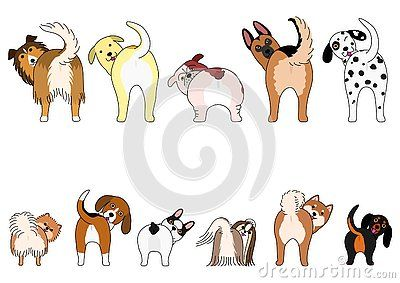 Set Of Funny Dogs Showing Their Butts Small Dogs And Large Dogs In Two Rows Funny Dog Painting Dog Drawing Animal Doodles