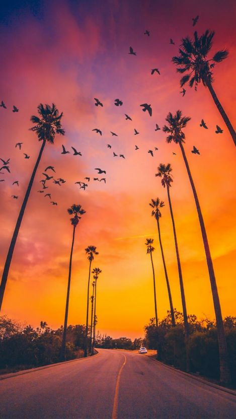 Palm Trees Sunset Nature iPhone Wallpaper - iPhone Wallpapers