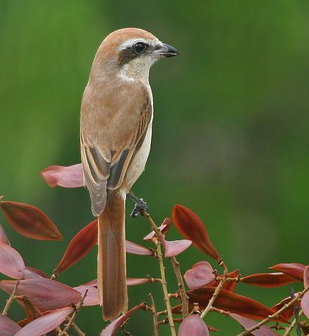 Pet Birds In India Birds In 2020 Pet Birds List Of Birds Birds