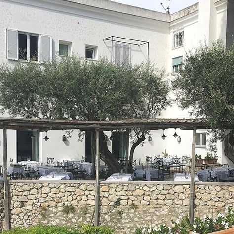 CAPRI ITALY Lunch under the olive trees. Doesnt get much more Italian?  Food is one of the things I enjoy most about travelling and Italy is filled with delicious food. From high end restaurants to simple pizzarias the food is good  #Capri #villamargherita