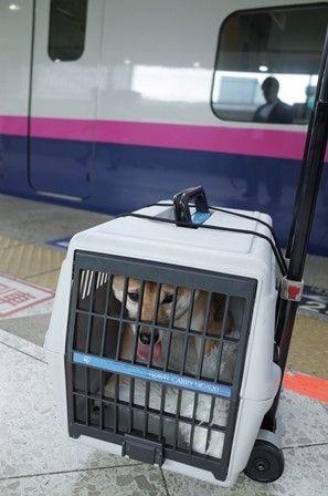 犬を電車や新幹線に乗せる 犬 キャリー 犬 新幹線