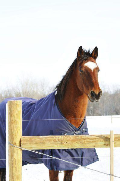 Horse Blanket Pattern Horses Rugs