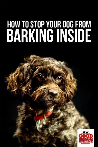Dog Agility Training Equipment Dog Training Reward Treats
