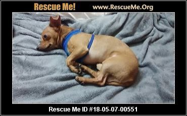 Florida Dachshund Rescue Adoptions Rescueme Org Dachshund
