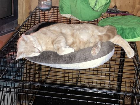 DeeMeow🐾 on Twitter: 💤💤 Cutie has mastered the donut 🍩 He is curling up instead of hanging across it 😹 He looks comfy 😻…