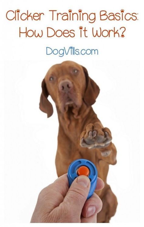 How Does Clicker Training Work Dog Clicker Training Dog