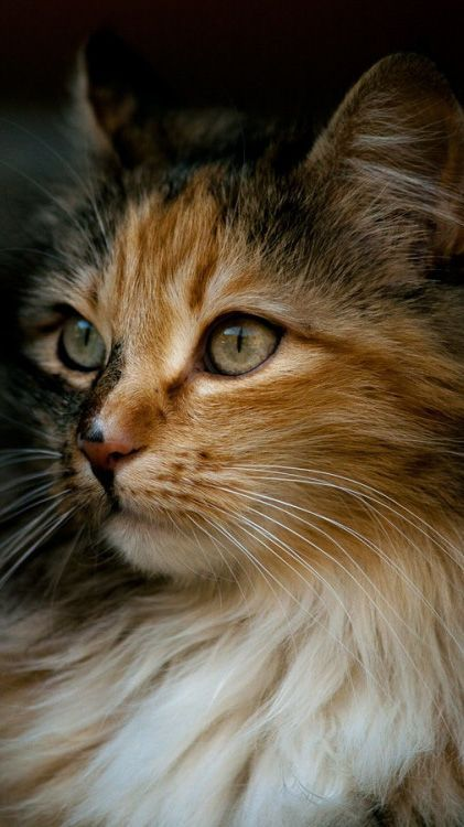 Some cats act old and crotchety when they are 7 or 8, while others still act like kittens when they are 12 or 13. Most cats, though, start to enter their senior years when they are 8 to 10 years old.