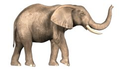 Download Elephant Png Images Background Png Free Png Images Elephant Images Elephant African Bush Elephant Download elephant png images transparent gallery. download elephant png images background
