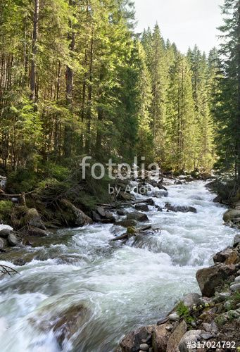 Landscape With A Mountain River In Fir Forestwith Red Squirrels On Trees In Early Spring Sponsored Fir Forestwith River In 2020 Mountain River Landscape River