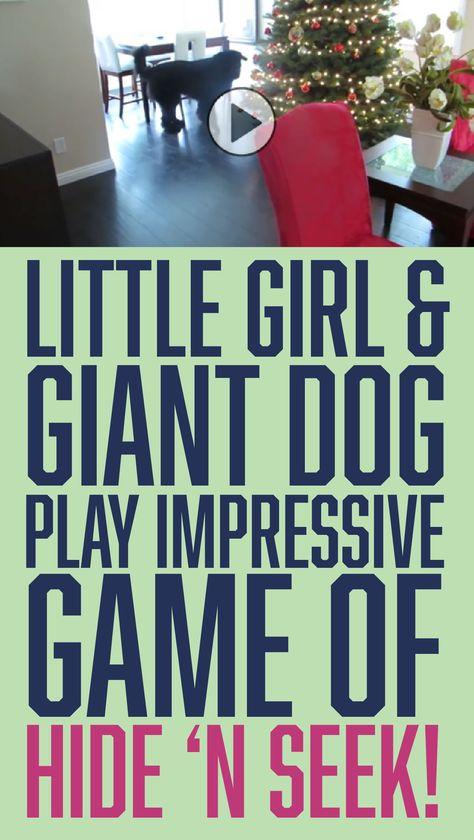 Little girl & giant dog play impressive game of hide-n-seek!