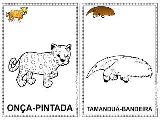 Pin De Ita Angelita Em Pantanal Em 2020 Com Imagens Animais Em