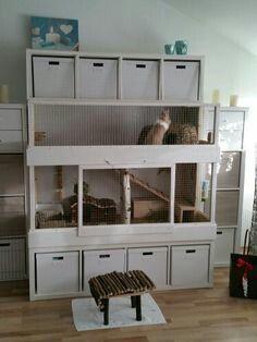 Pin Auf Indoor Pets