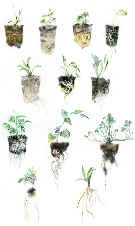 watercolour images with roots and soil included, vulnerable and raw
